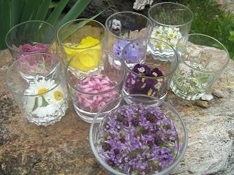 flower-essences1