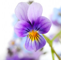 hd_pictures_of_beautiful_flowers_04_166897
